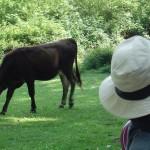 Bizi Berria 13 juin 2014 Picnic Irun 063